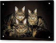 Brown Siblings Acrylic Print