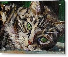 Brown Tabby Cat Acrylic Print