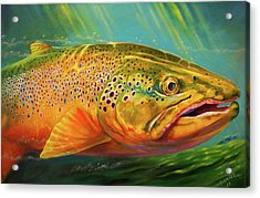 Brown Trout Portrait  Acrylic Print by Yusniel Santos