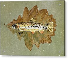 Brown Trout Acrylic Print by Ralph Root