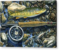 Brown Trout Rush Creek Acrylic Print by Mark Jennings