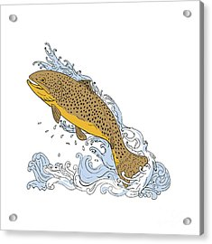 Brown Trout Swimming Up Turbulent Water Drawing Acrylic Print by Aloysius Patrimonio