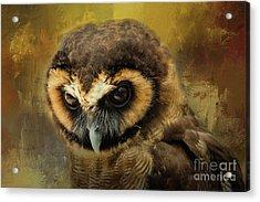 Brown Wood Owl Acrylic Print