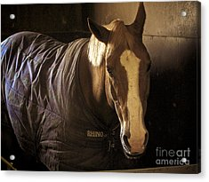 Brownie Acrylic Print by Valerie Morrison
