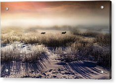 Brumous Willow Bed // Greater Yellowstone Ecosystem Acrylic Print