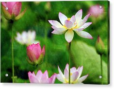 Acrylic Print featuring the photograph Brushed Lotus by Edward Kreis
