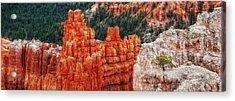 Bryce Canyon - Lone Tree Acrylic Print