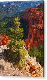 Bryce Canyon - Pine Tree Acrylic Print