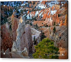 Bryce Canyon Amphitheater Acrylic Print by Rincon Road Photography By Ben Petersen