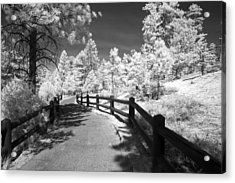 Bryce Canyon Trail Acrylic Print by Mike Irwin