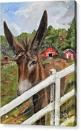 Acrylic Print featuring the painting Bubba - Steals The Show -donkey by Jan Dappen
