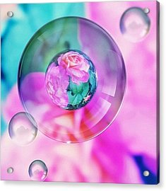 Bubble Roses Acrylic Print