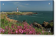 Buchan Ness Lighthouse And Spring Flowers Acrylic Print