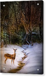 Buck At Snowy Creek Acrylic Print