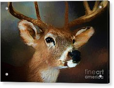 Acrylic Print featuring the photograph Buck by Darren Fisher