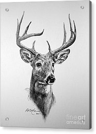 Buck Deer Acrylic Print by Roy Anthony Kaelin