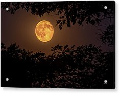 Acrylic Print featuring the photograph Buck Moon 2016 by Everet Regal