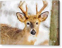 Buck Profile Acrylic Print