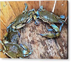 Acrylic Print featuring the photograph Bucket Of Blue Crabs by Jennifer Casey