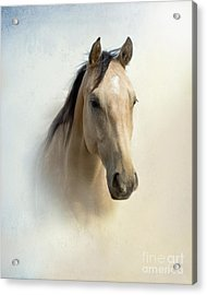 Buckskin Beauty Acrylic Print by Betty LaRue