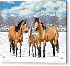 Buckskin Horses In Winter Pasture Acrylic Print