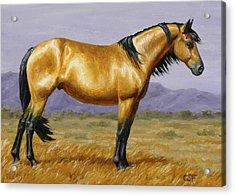 Buckskin Mustang Stallion Acrylic Print by Crista Forest