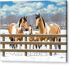 Buckskin Paint Horses In Snow Acrylic Print by Crista Forest