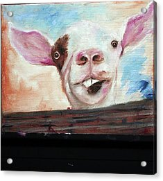 Bucktooth'd Goat Part Of Barnyard Series Acrylic Print