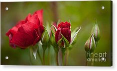 Bud Bloom Blossom Acrylic Print by Mike Reid