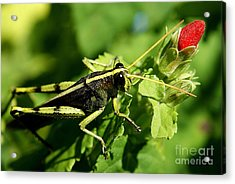 Acrylic Print featuring the photograph Bud Hopper by DiDi Higginbotham