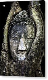Buddha Head In Banyan Tree Acrylic Print by Adrian Evans