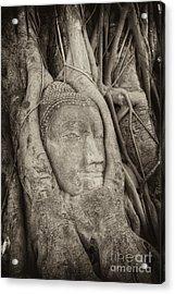 Buddha Head In Tree Acrylic Print
