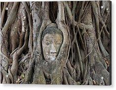 Buddha Head In Tree, Temple Wat Mahatat, Thailand Acrylic Print