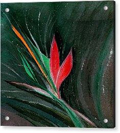 Budding Acrylic Print by Anil Nene
