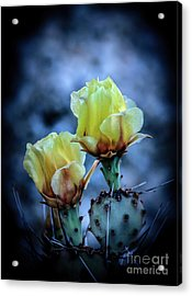 Acrylic Print featuring the photograph Budding Prickly Pear Cactus by Robert Bales