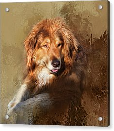 Acrylic Print featuring the photograph Buddy by Theresa Tahara