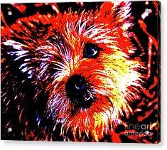 Buddy Acrylic Print
