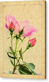 Buds And Bloom - Rose Floral Acrylic Print by Barry Jones