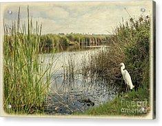 Buena Vista Lagoon-snowy Egret Acrylic Print
