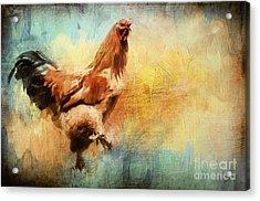 Buff Brahma Mrs. Darwin's Rooster  Acrylic Print