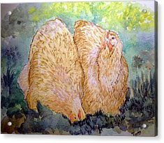 Buff Orpington Hens In The Garden Acrylic Print