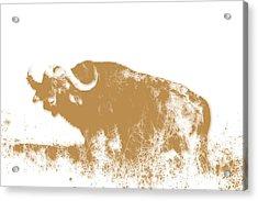 Buffalo 4 Acrylic Print