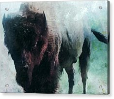 Buffalo American Bison Acrylic Print