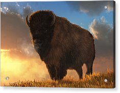 Buffalo At Dawn Acrylic Print