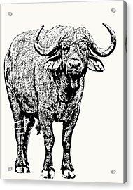Buffalo Bull, Full Figure Acrylic Print