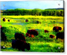 Acrylic Print featuring the painting Buffalo Coming Home by FeatherStone Studio Julie A Miller