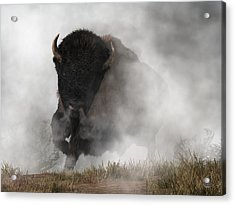 Buffalo Emerging From The Fog Acrylic Print by Daniel Eskridge