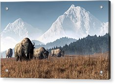 Buffalo Grazing Acrylic Print by Daniel Eskridge