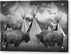 Buffalo Herd Among Teepees Of The Blackfoot Tribe Acrylic Print by Randall Nyhof