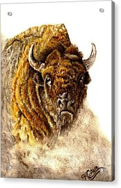 Buffalo Acrylic Print by Karen Cortese